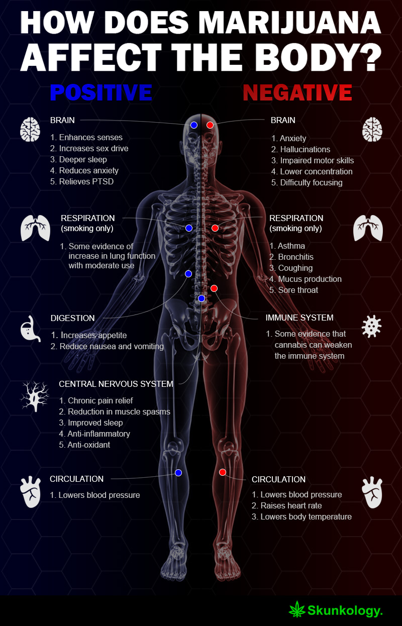 How Does Marijuana Affect the Body? – Infographic
